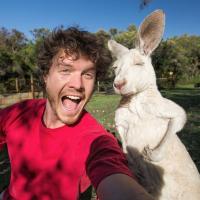 Selfie kangaroo